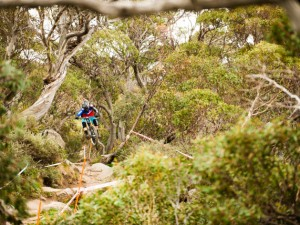 Mountain biker jumping onn their bike in dense greenery