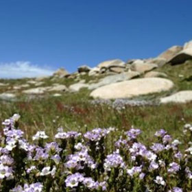 For Australians the Kosciuszko National Park is renowned as  a high ...
